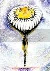 A margarida friorenta, em ilustração de Lila Figueiredo.
