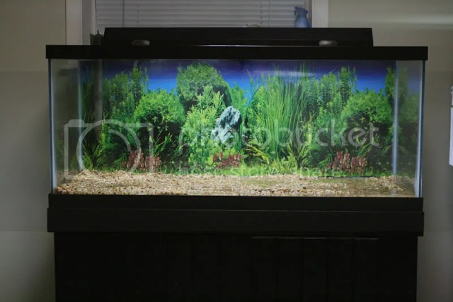Thread: 75 gallon AGA aquarium/stand/glass tops(MD,DC,VA,PA)