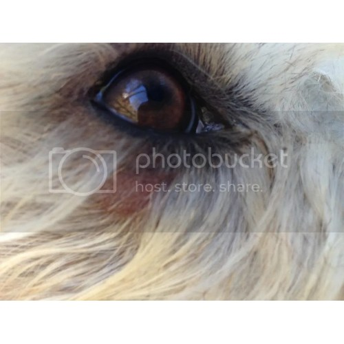 Medium Crop Of Dogs Eyes Are Red