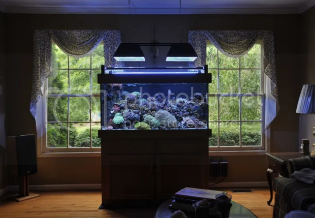 This is my sump (it is underneath my display tank)