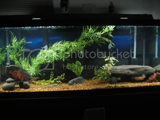 Oscarfish.com ? View topic   Ideas for oscar tank.