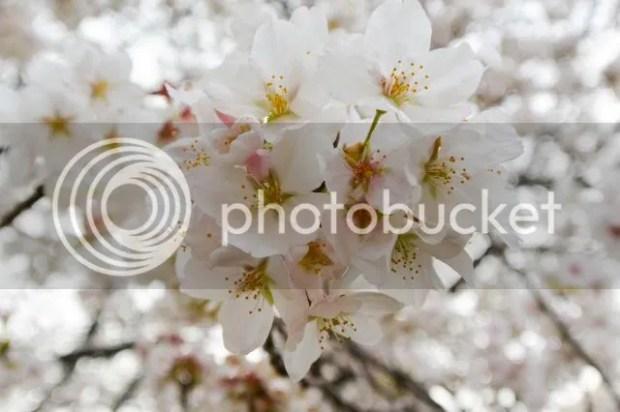 photo SK33of1.jpg