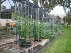Small Of Texas Tomato Cages