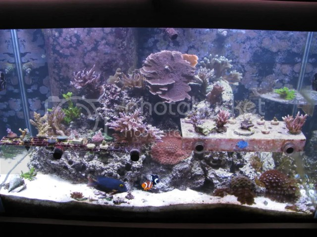 Saltwater fish for 65 gallon tank 65 gallon aquarium for 65 gallon fish tank