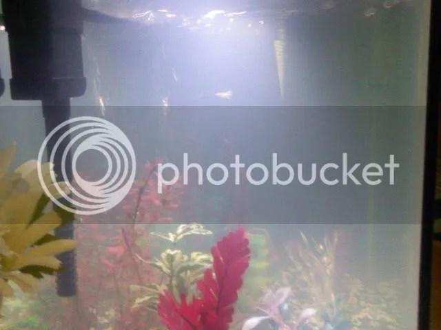 Cloudy water   cycling tank   Tropical Fish Keeping   Aquarium fish