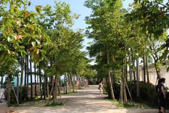 Marina Bay Sands Hotel sky park