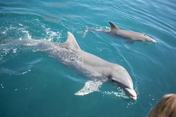 Dolphin mother and child