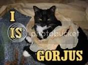 My Tuxedo cat