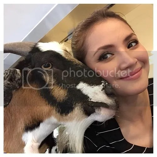fazura anjing