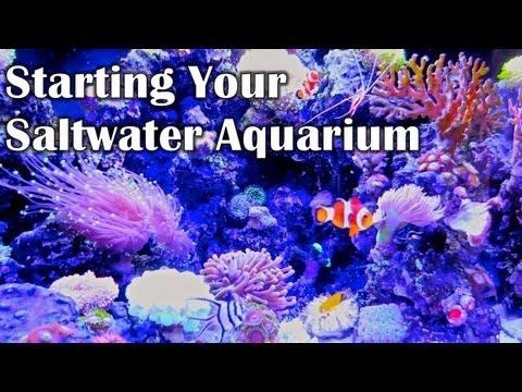 my nano reef aquarium tank lifeaftercollegevids lifeaftercollegevideos