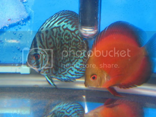 Re: Kenny/Forrest Discus for Sale in Michigan