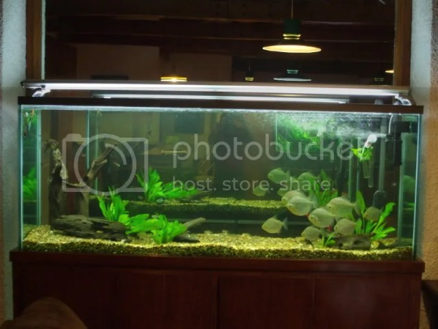 Live Plant Background   Ideas   The Planted Tank Forum