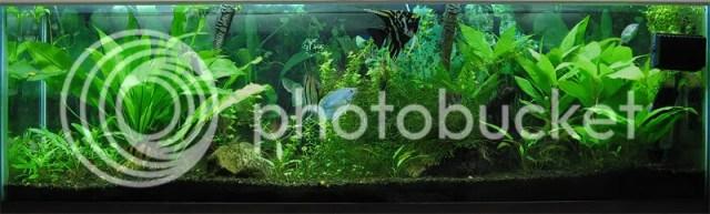 10 Gallon Aquarium Design Ideas Current aquariums: 40 gallon