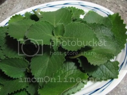 oregano leaves for cough