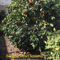 From Seedy to Seedless