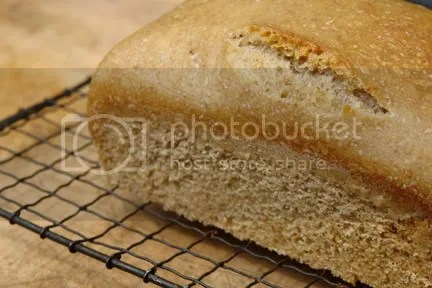 freshly-baked wholemeal sourdough loaf on a cooling rack
