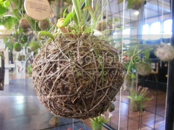 MIFGS String Ball Garden