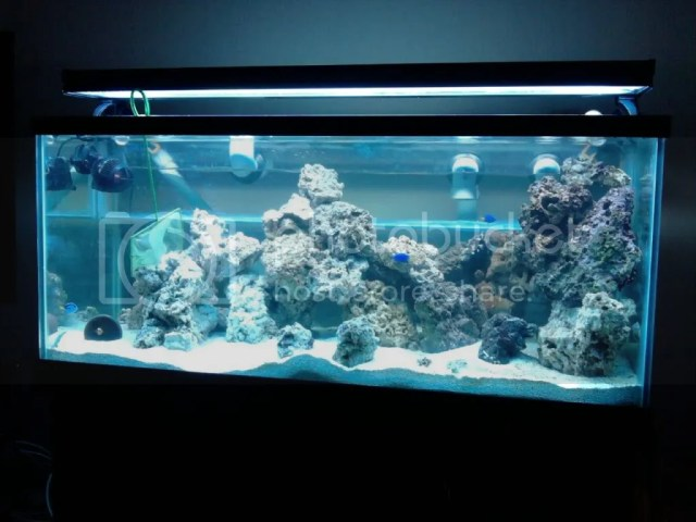 75 gallon mixed reef 40 gallon breeder sump mag 9