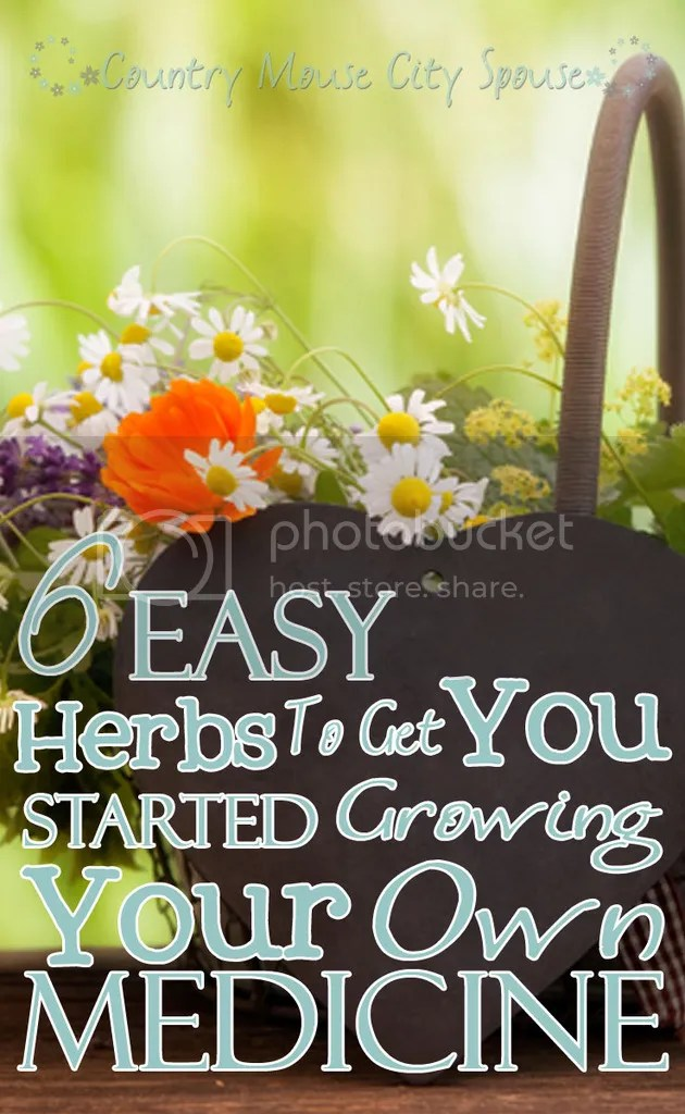 Six Easy Herbs to Get You Started Growing Your Own Medicine- Country Mouse City Spouse
