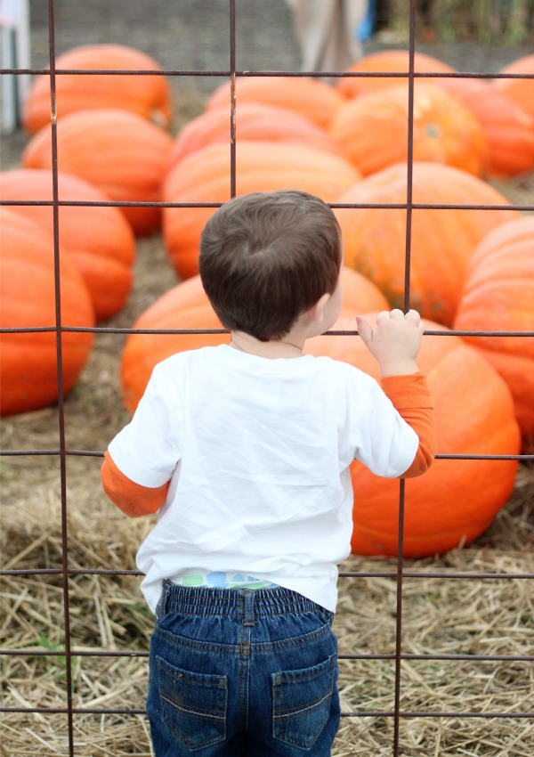 Eyeing the giant 100-pound, $70 pumpkins. Toddlers have expensive taste.
