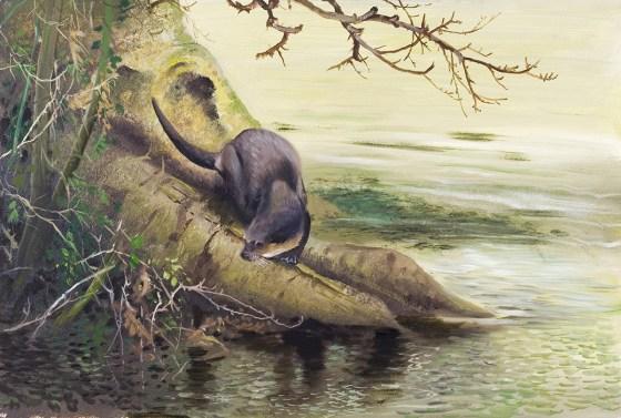 Otter-at-Thetford-Martin-Woodcock