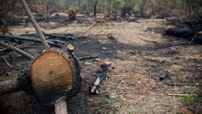 Miles de hectáreas de bosques han sido taladas para sembrar aguacate en Michoacán.
