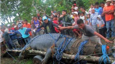 Philippine giant croc captured after three-week hunt - BBC ...