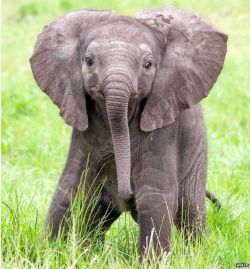 Small Of Do Elephants Think Humans Are Cute