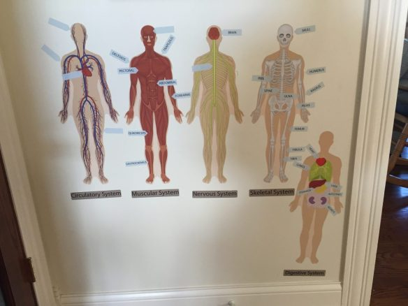 Mona Melisa Designs Human Body 037