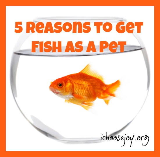 5 Reasons to Get Fish as a Pet