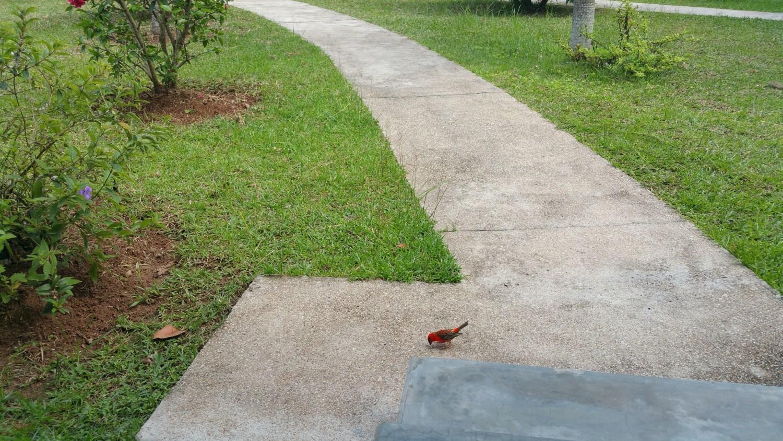 Der Madagskarweber, mit dem wir unser Frühstück teilten. Er bekam allerdings Essen auf Zuteilung und war nicht so frech wie die Hühner.