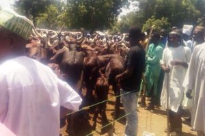 troops-arrest-terrorists-disguised-as-cattle-sellers