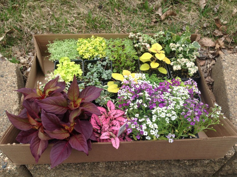 Large Of The Fairy Gardens