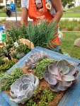 iecn photo/yazmin alvarez</p><br /> <p>Drought-tolerant plants are one of the ways to reduce water-use.
