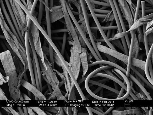 microscopio_imagens_20