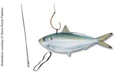 Kite Fishing rigged Herring - Fishing Miami