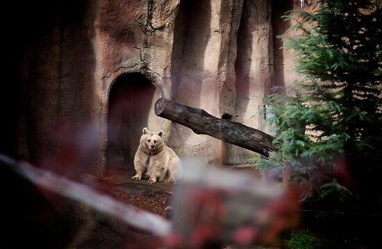 My Inner Brown Bear, Melbourne Zoo