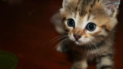 Happy Kittens HD Wallpapers | I Have A PC