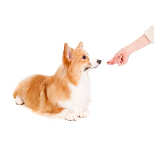 Medium Crop Of Treat A Dog