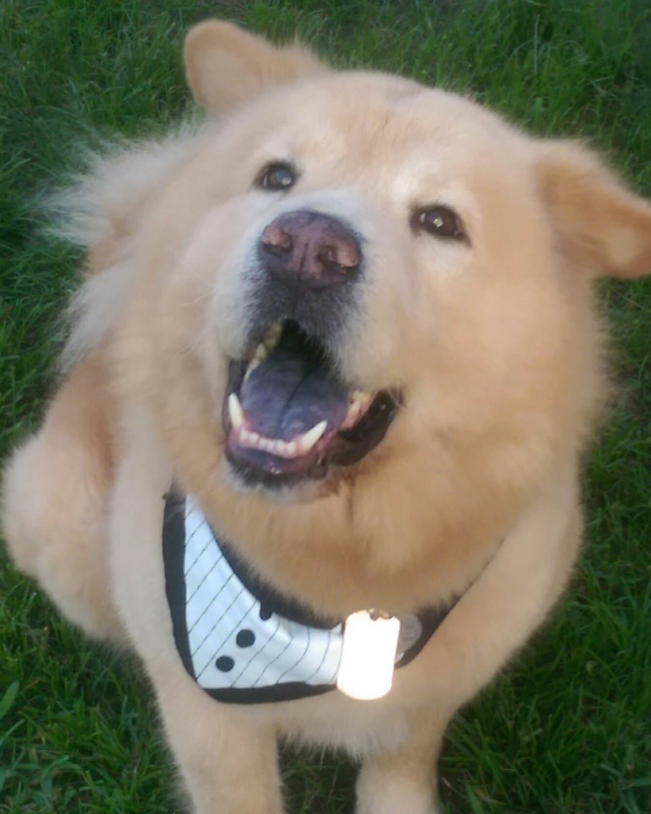 Smartly Author Rescue Chow Chow Babies Baby Chow Chow Dog Sale Sale Baby Chow Chow bark post Baby Chow Chow