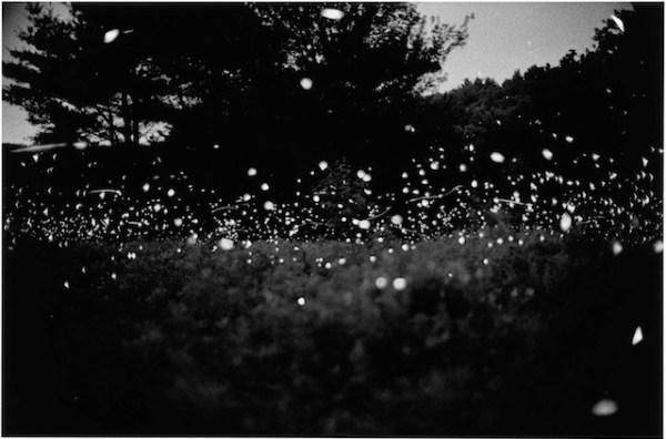 wavehillfireflies5