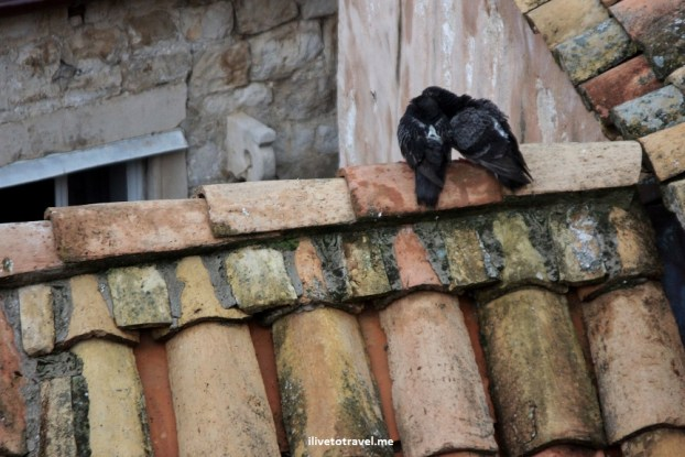 Love birds on tiled roof in Dubrovnik. Croatia