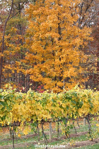 The grounds at Veritas Vineyard - great fall colors in Virginia wine country