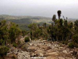 Descent to Mweka Camp in Kilimanjaro