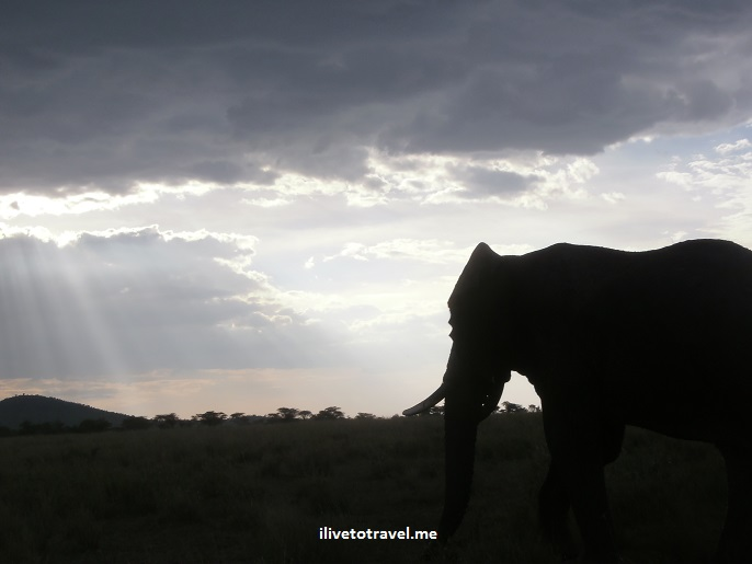 Safari, Serengeti, Tanzania, wildlife, animls, elephant, outdoors, nature, photo, Olympus, sunset