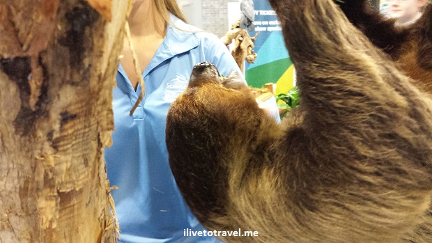 wildlife, sloth, Busch Gardens, travel and adventure show