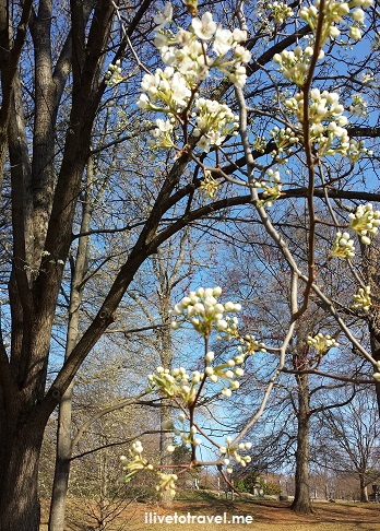 Atlanta, spring, flowers, Piedmont Park, photo