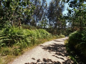 Camino de Santiago, nature, Lavacolla, Spain, España, Espagne, trekking, hiking, pilgrimage, travel, photo, outdoors, Olympus