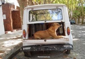 Colonia, Sacramento, Uruguay, colonial, travel, photo, dog