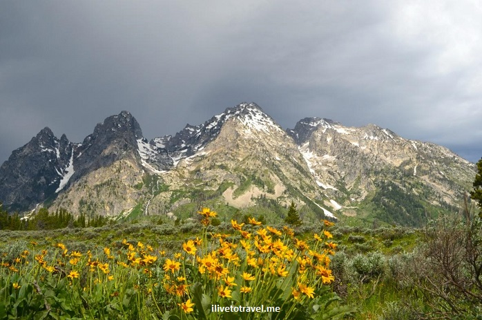 Grand Teton National Park, Wyoming, Grand Tetons, outdoor, nature, flowers, mountain, travel, hiking